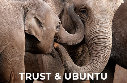 rust and ubuntu